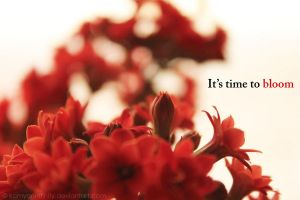 It's time to bloom by kamyar-infinity