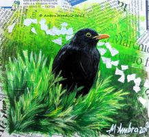 Blackbird - I by flysch