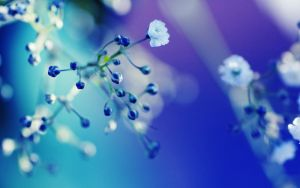 something in blue by dorinaOo