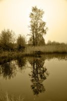 Reflection by sudd