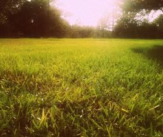 The Grass Glistens. by leannlaughlove