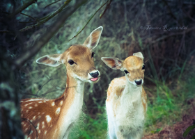 Derpy Deer Face by TammyPhotography