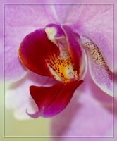 series with orchid for Iwonka by grandma-S
