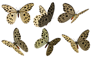 Butterflies 3 PNG Stock by Roys-Art