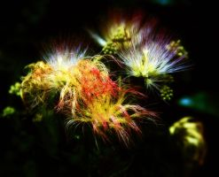 Nature's fireworks by AngelsOdyssey