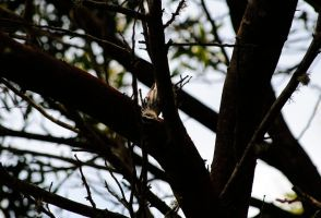 Black-and-white Warbler VIII. by swampliquor