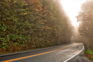 Slick Mist Forest Road by somadjinn