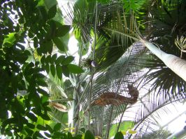 Tropical Plants at the Greenhouse by AleksVarts