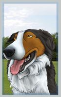 Border Collie by mlaproductions