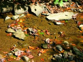 Leaves in the Creek by Nookslider