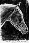 Grey horse in shadow sketch by smilinggoatstudio