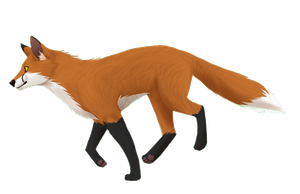 Red fox by Fluff-butts
