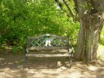 Shaded Bench in the Dog Park by FantasyStock