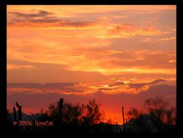DayGlo Red Orange May Sunset by RooCat
