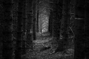 Forest Path by Drake-UK