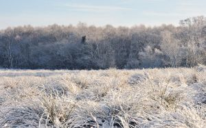 Hillhead Wood in Winter II by younghappy