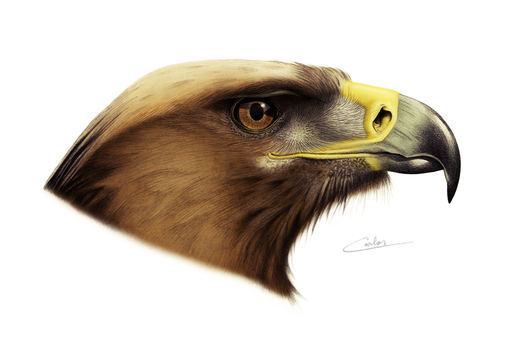 Golden Eagle by CarlosVenator