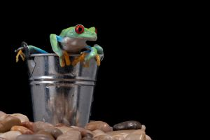 The bucket and the frog by AngiWallace