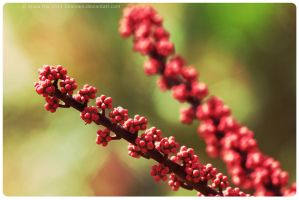 Red pearls by sharvani