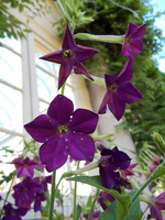 Eastman House - Violet Flowers by Ammoniite