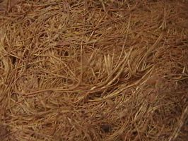 Texture- Natural 01 by texture-resources