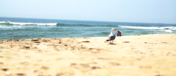 Jersey Seagull by ForeverxShiva