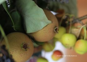 Apples and pears from my garden by GeaAusten