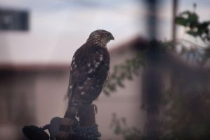 Hawk Post 1 by Dynamoe