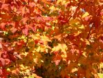 Autumn Leaves by assimilated