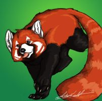 Red Panda by Tiggstar