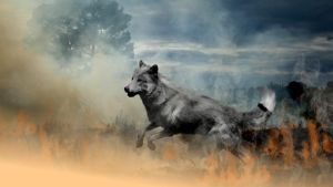 A manip i did for wolfwolves16 by Terohime