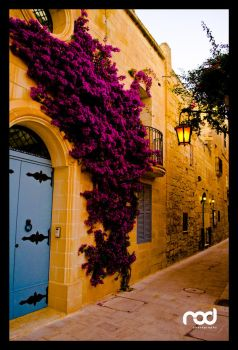 Flowers at Mdina 2 - Malta by MaNkIbOwN