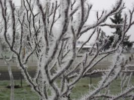 Ice on the Wisteria by MasterGunyer