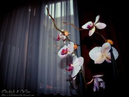 Orchids for You by JDLuxe