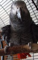 crazy parrot.. by Mirey-chan