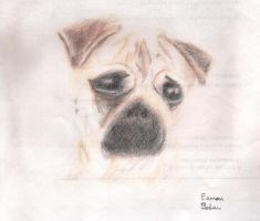 Pug from Heck by skinsvideos21