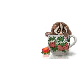 Cup of Slow Loris Wallpaper by Psithyrus