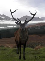 Highlands Stag by niveky