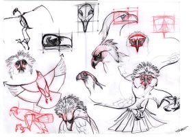 Philippine eagle studies by Autlaw