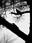 Woodpecker Silhouette by timothymh