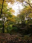 Autumn Forest Landscape 13 by FantasyStock