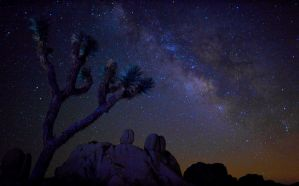 Joshua's Milky Way by louieschwartzberg