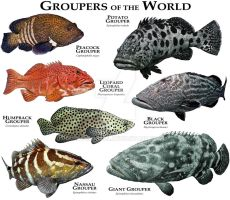 Groupers of the World by rogerdhall