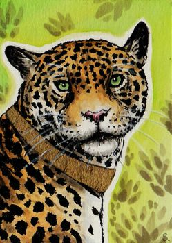 ACEO -  Woodswallow - King of the Jungle by MargotShareaza