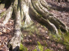 Tree Trunk by Kilalaflames