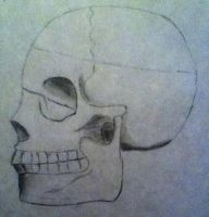 A skull :O by IcarusNocturne