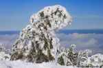 snow trees 3 by MT-Photografien