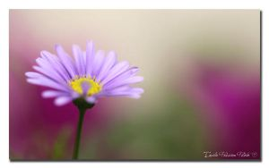 Colorful Day by Emilie25