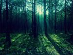 Forest. by Tyna2312