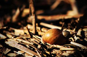 Snail Yard by Dan52T